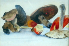 More Mushrooms and Toadstools